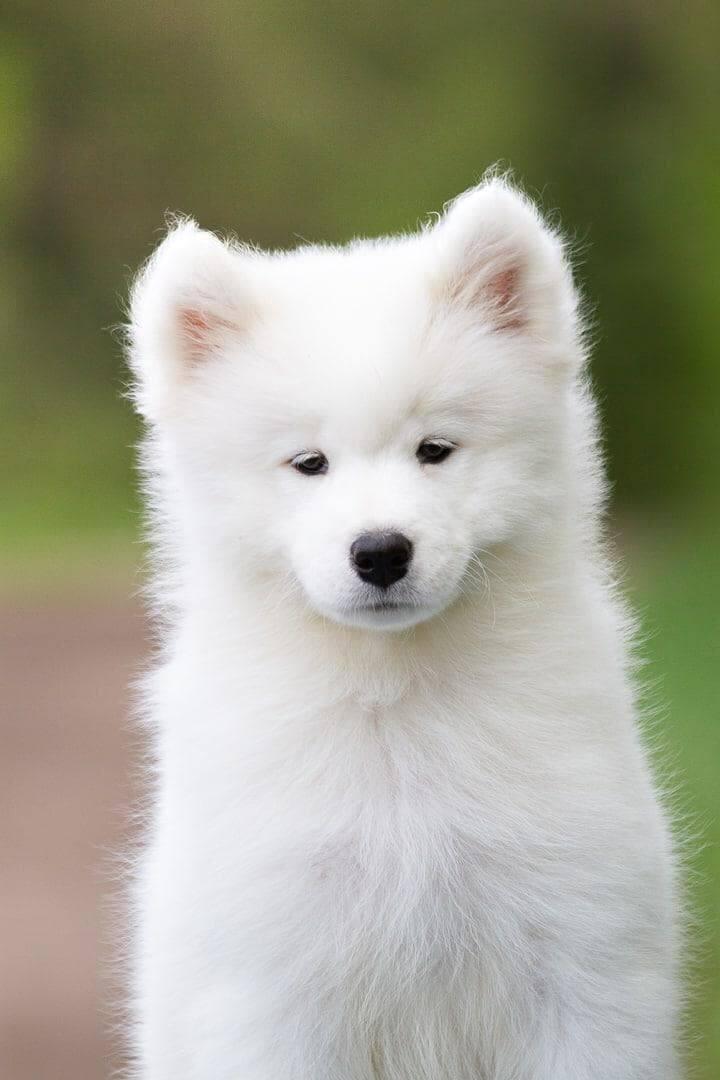 Byłe gwiazdy Iskry Kielce spotkały się na ... wystawie psów rasowych. Mają sukcesy