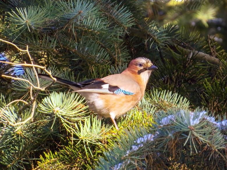 Przyroda budzi się do życia. Ptaki z bydgoskich parków [zobacz zdjęcia i wideo]