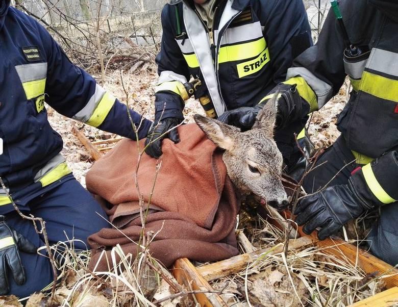"""Zwierzę we wczesnych godzinach rannych ugrzęzło w zabłoconym i zasypanym konarami i śmieciami zbiorniku przeciwpożarowym na terenie po byłym """"Zachemie""""."""