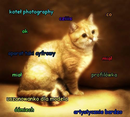 światowy Dzień Kota Koteł Robi Furorę W Internecie Koteł Memy