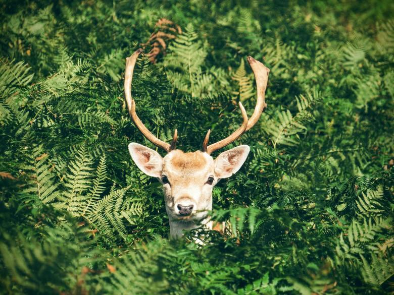 Zwierzęta zagrożone wyginięciem w Polsce to ponad 2000 gatunków! Zobacz niektóre z nich.