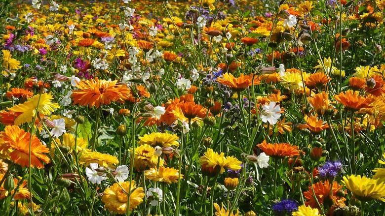 Miód tysiąca kwiatów produkowany jest z nektaru leśnych i łąkowych kwiatów rozmaitych odmian. W zależności od czasu zbioru, może mieć inny smak i barwę.