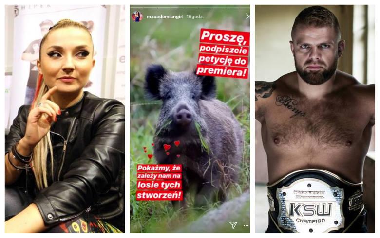 Kolejne osoby zabierają głos w sprawie planowanego odstrzału dzików. Wśród nich są też artyści i sportowcy ze Szczecina. Zobaczcie, co na ten temat mają