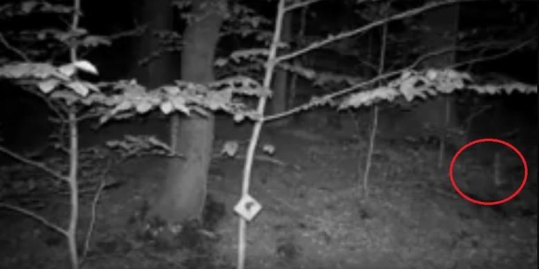 """Dziwna """"postać"""" w Górach Sowich. Co nagrali przyrodnicy? [FILM]"""