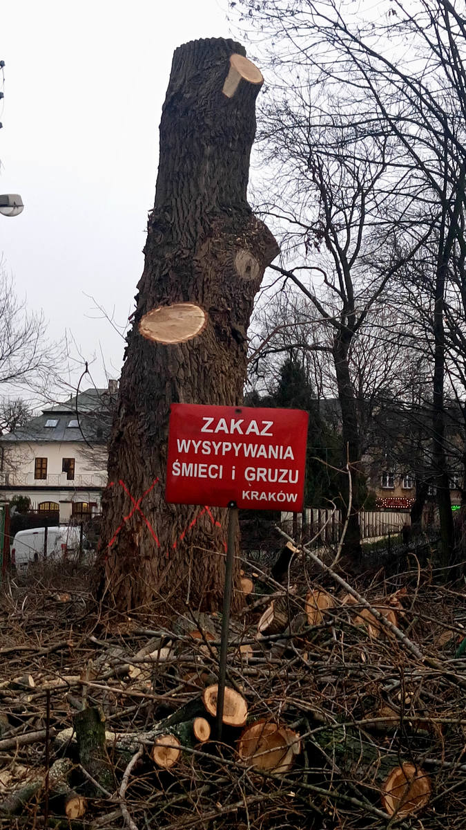 Kraków. Nielegalna wycinka drzew na Placu na Stawach? Urzędnicy badają sprawę