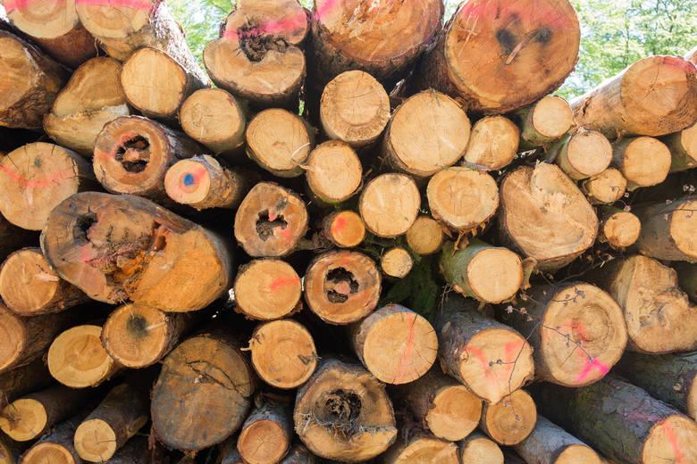 """Wycinka lasu w Gdyni. Lex Szyszko """"poprawia"""" krajobraz Trójmiasta"""