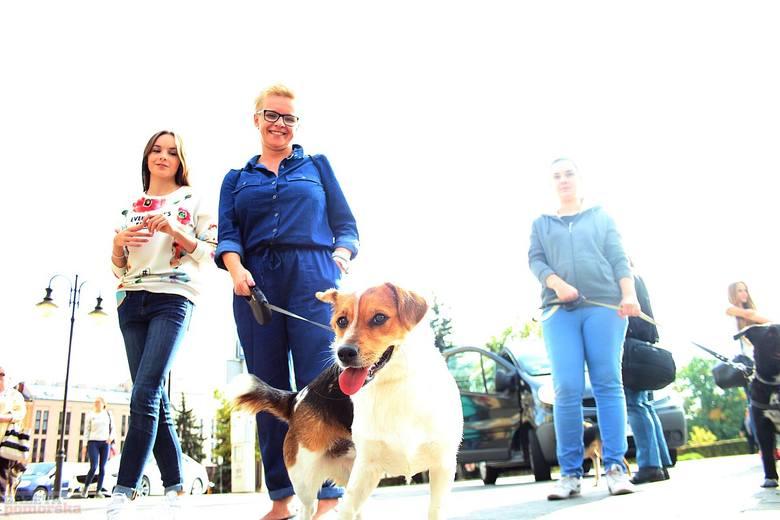 Pięćdziesięciu właścicieli psów oraz wolontariuszy ze schroniska dla zwierząt przy ul. Przemysłowej przeszło wczoraj głównym deptakiem Włocławka. W ten