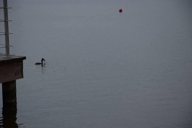 Wakacje nad Jeziorem Sławskim 2017