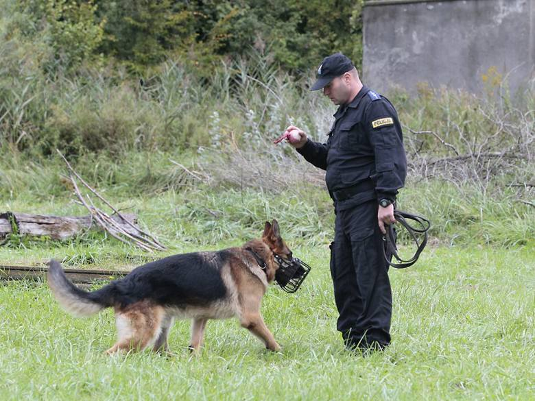 Im pies bardziej słuchał się przewodnika i sprawniej wykonywał ćwiczenia tym więcej punktów zdobywał. Najlepsze zwierzaki będą reprezentować nasze województwo