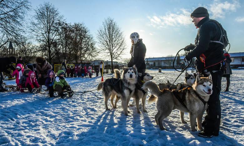 To pierwszy raz, gdy psiaki odwiedziły przedszkolaki ze Szwederowa
