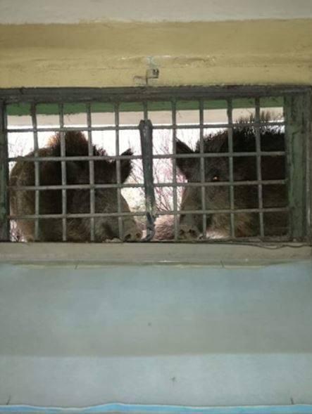 Dziki zamieszkały pod balkonem jednego z bloków przy ul. Maratońskiej.