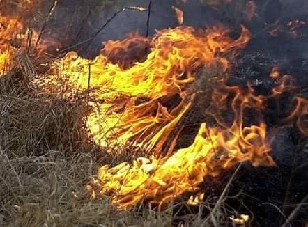 Płonęły trawy w Słupsku. (Zdjęcie poglądowe).