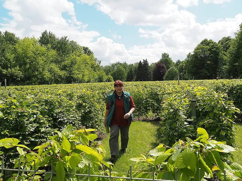 W Ogrodzie Botanicznym w Łodzi można zagubić się w labiryncie. Nowa atrakcja łódzkiego botanika