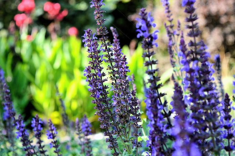Miłośnicy pięknych i zadbanych ogrodów wiedzą, w którym miejscu można nabyć najlepszą ziemię do kwiatów lub nasiona. Dla tych, którzy dopiero rozpoczynają