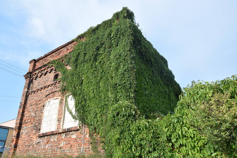 Zielona Góra, sierpień 2019. Domek winiarski powoli zarasta zielenią.