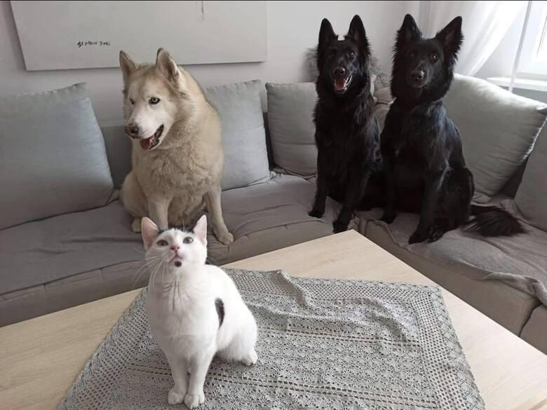 """Nasza zachęta do opublikowania zdjęć Waszych zwierząt, którą zamieściliśmy na profilu """"Nowości"""", spotkała się z wielkim odzewem. Z"""