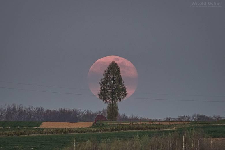 Wyjątkowe zdjęcia różowego Księżyca wykonane w Woli Zgłobieńskiej przez Witolda Ochała.