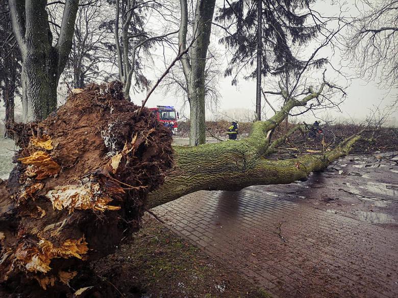Prawie 20-metrowe drzewo runęło, blokując drogę. Choć cmentarz odwiedzało wiele osób, na szczęście nikt nie ucierpiał. Oczywiście pomogli strażacy, którzy