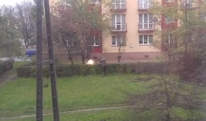 Jaworzno: Strzelał do dzików na środku osiedla. To był planowy odstrzał WIDEO