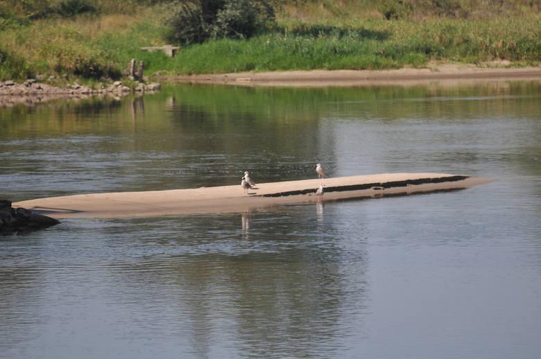 Taka sytuacja powtarza się od kilku lat. W lecie przepływające przez Kostrzyn rzeki są bardzo płytkie. Nie inaczej jest w tym roku. Wodniacy narzekają,