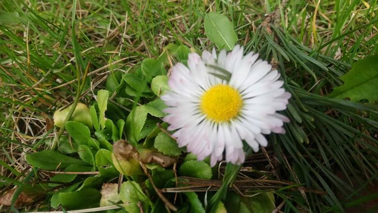 Gmina Koluszki. My w domach, a na zewnątrz piękna wiosna