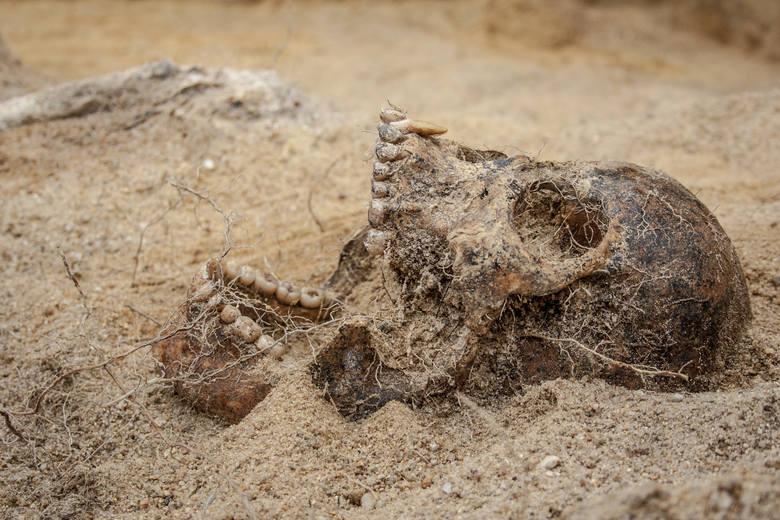 Dziś archeolodzy skłaniają się ku teorii, że są to szczątki ofiar zarazy