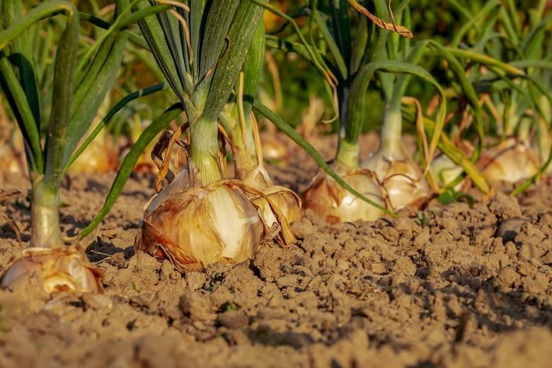 Badaniem gleb zajmują się Okręgowe Stacje Chemiczno-Rolnicze. Więcej informacji na stronie: www.schr.gov.pl i stronach okręgowych stacji