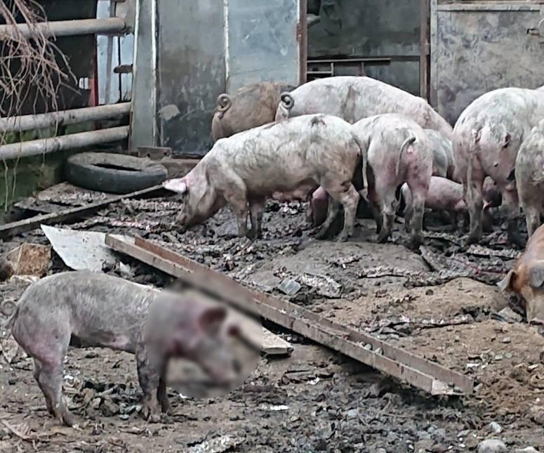 Policjanci ze Słomnik zatrzymali 51-latka, który odpowie za znęcanie się nad zwierzętami.