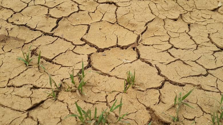 Jak radzić sobie z suszą? Zastanawiają się nad tych rolnicy, którzy w ostatnich latach liczyli straty spowodowane właśnie brakiem lu niedostatkiem o
