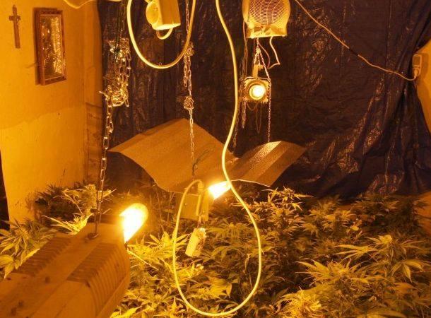 Kolno - marihuana. Uprawa w domu 50-latka (zdjęcia, wideo)