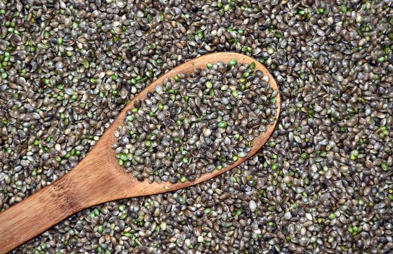 Nasiona konopi, zwane siemieniem albo orzeszkami konopnymi, to jedno z najbogatszych odżywczo nasion oleistych. Mają wysoki poziom białka – w tych łuskanych