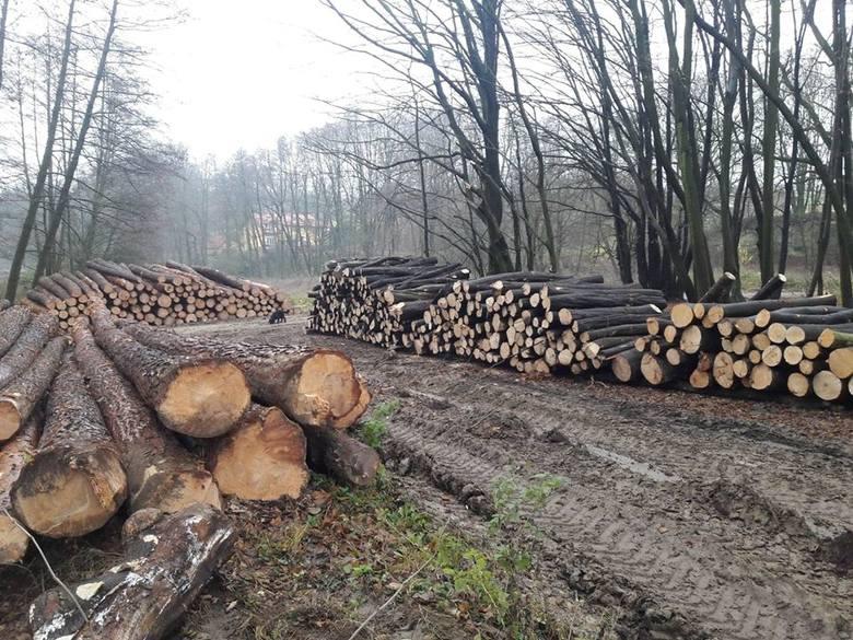 Drzewa w lasach bukowych w okolicy Kleszczowa są wycinane od kilku lat. Ludzie podnieśli bunt