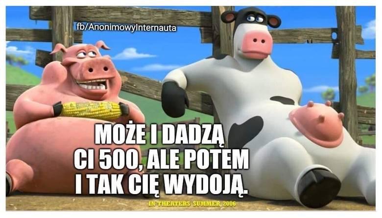 Reakcja internetu na dopłaty dla rolników: Krowa plus i świnia plus. Zobacz memy w galerii na kolejnych slajdach.
