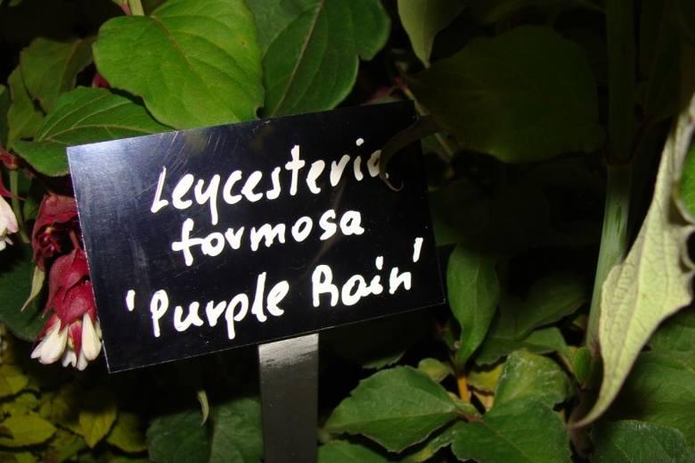 Tabliczki z nazwami roślin są estetyczne, ale nie kojarzą się z przydomowym ogrodem.