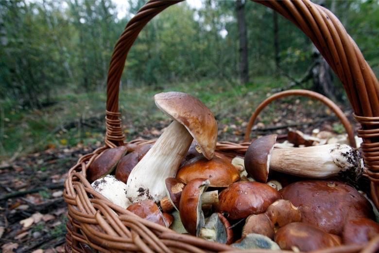 Choć mamy już listopad pogoda wciąż dopisuje. Zobaczcie, gdzie w regionie znajdziemy jeszcze grzyby?Mapa powstała na podstawie informacji od naszych