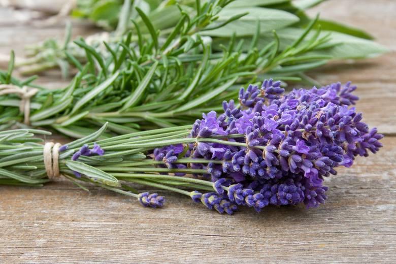 Lawenda lekarska, inaczej wąskolistna (Lavandula angustifolia) oraz lawenda szerokolistna – spika (Lavandula latifolia) zawierają silnie działające związki