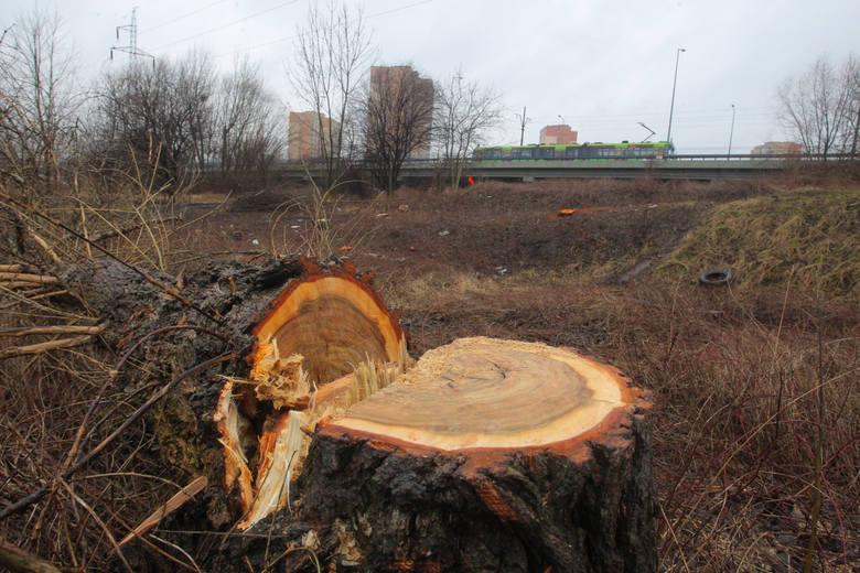 Wycinka drzew, Stare Żegrze