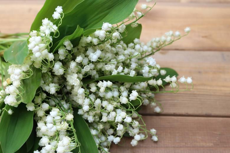 Konwalie - popularne kwiaty są piękne, pachnące i niestety... niebezpieczne.  Zawierają toksyczne związki, które mogą być przyczyną zatrucia i zagrażać
