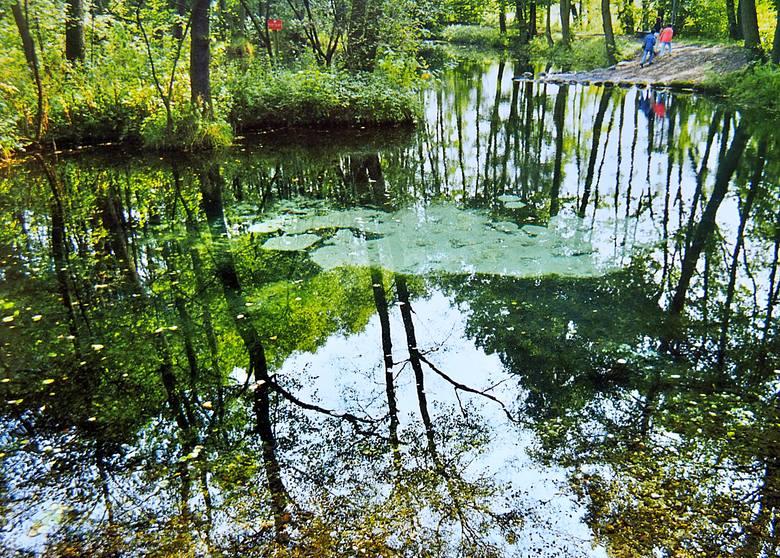 Niebieskie źródła znajdują się w południowo - wschodniej części Tomaszowa Mazowieckiego. To rezerwat przyrody położony w dolinie Pilicy.KLIKNIJ DALEJ