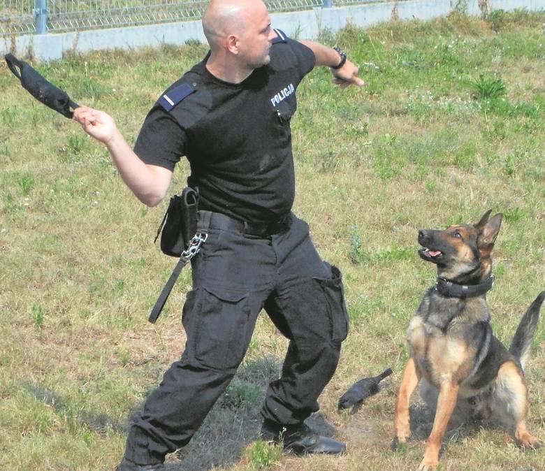 Pies Tajson Nowym Funkcjonariuszem Nowosolskiej Policji Zdjęcia