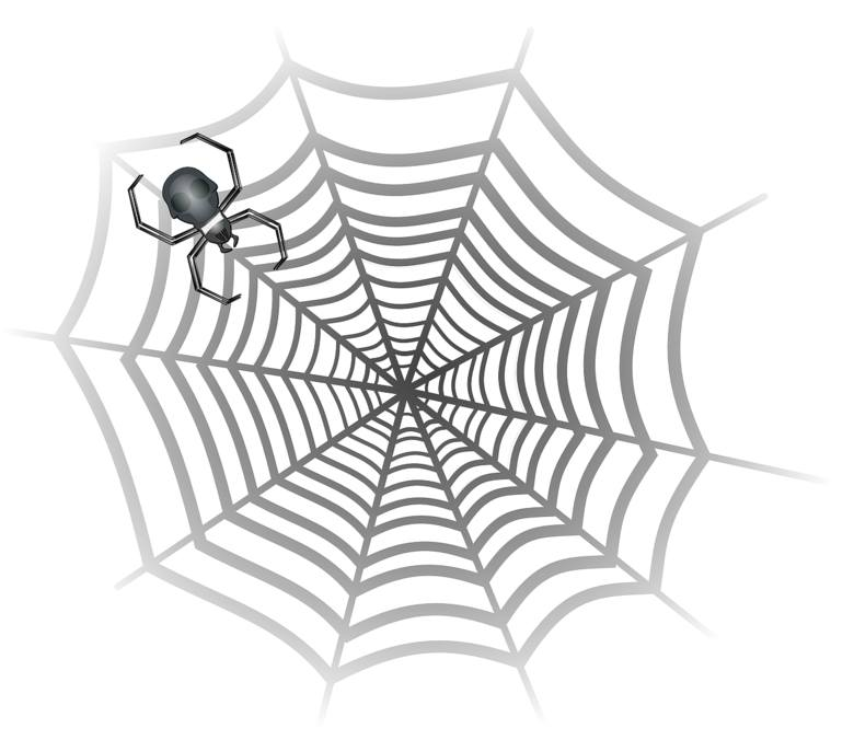 arachnofobia, pająk, pajęczyna, lęk przed pająkami