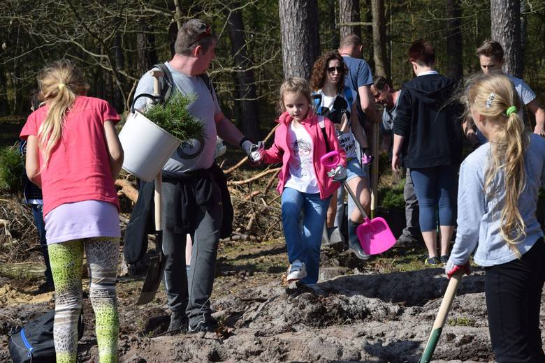 """W akcji """"Grudziądzanie sadzą las"""" wzięło udział ponad sto mieszkańców. Krótkiego instruktażu poprawnych nasadzeń udzielił Mateusz Cieślakiewicz,"""