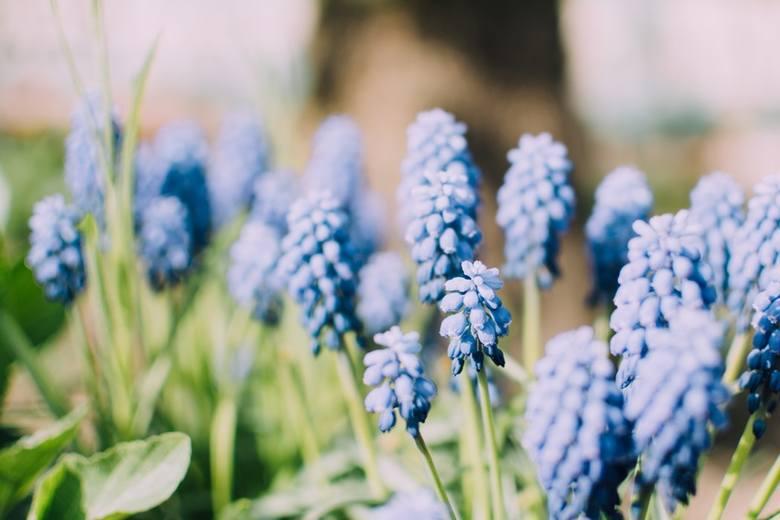 Życzenia na Dzień Matki 26.05. Piękne życzenia na 26 maja. Wzruszające życzenia, wierszyki, kartki, SMS na Dzień Matki 2018