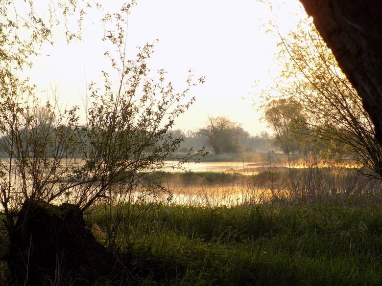 Bieliki uwielbiają miejsca, gdzie jest woda i obfitość pokarmu.
