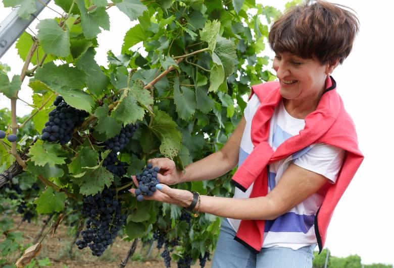 Elżbieta Anna Polak: Winnice to tradycja, ale także nasza przyszłość
