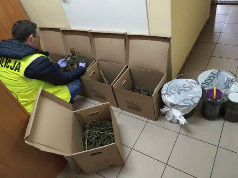 Golubsko-dobrzyńscy policjanci zatrzymali 26-letniego mieszkańca powiatu toruńskiego, który posiadał znaczną ilość narkotyków i miał zamiar nielegalny