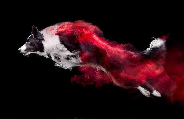 To nie grafika, to fotografia: zdjęcia psów w kolorowym pyle. Ten efekt hipnotyzuje!