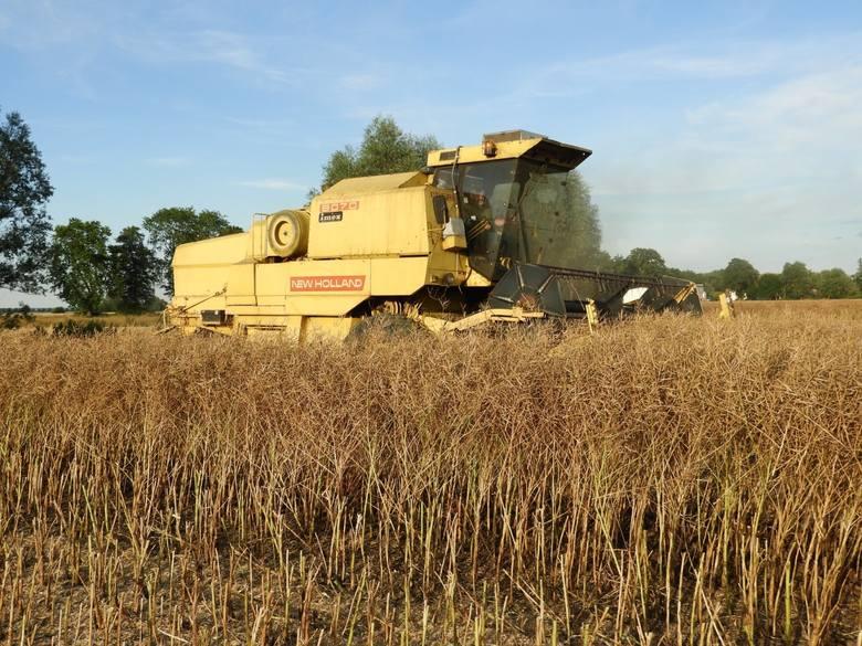 Żniwa 2020. Zobacz te piękne ZDJĘCIA z prac polowych i sprawdż ceny zbóż