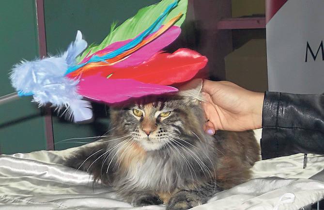 zdjęcia nagich kotów