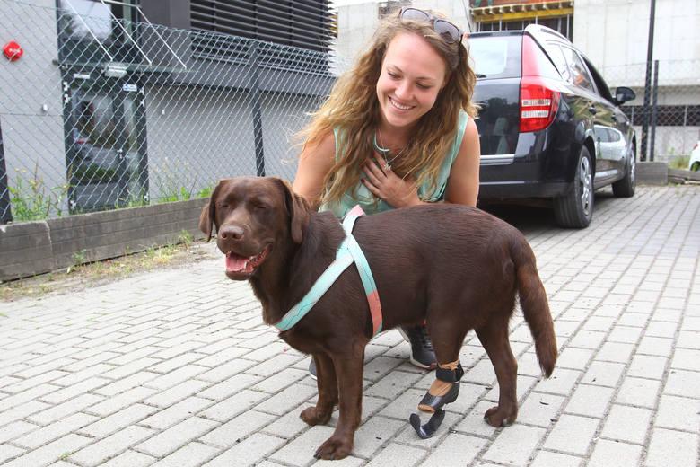 Suczka Trufla urodziła się bez tylnej łapki. Protetycy z Rzeszowa podarowali jej protezę [ZDJĘCIA, WIDEO]